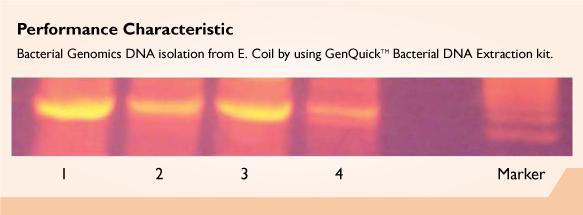 GenQuikTM Bacterial DNA Kit